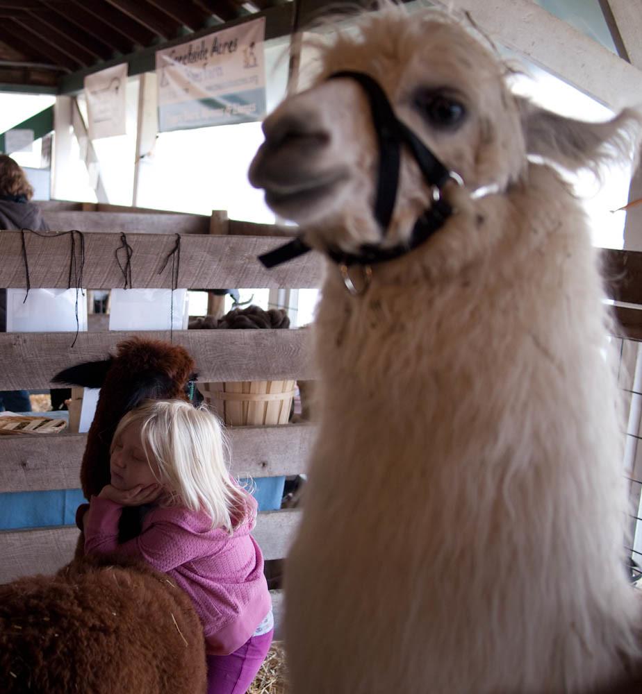I'm hugging an alpaca, lalalala