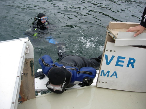 Jacki Boards Easy Diver