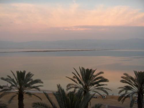 Palms Framing the Sunset