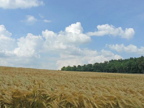 Touraine landscape