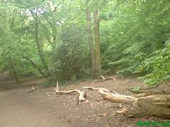 Gloomy Weather Again: Highgate Wood May 2010