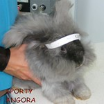 SPORTY ANGORA from the SPCA