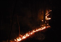 Forest Fire Fire line