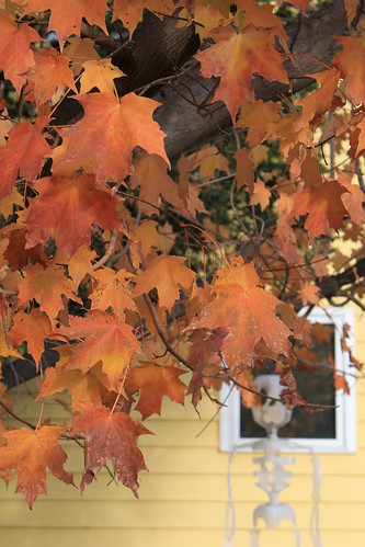Marshfield Wisconsin - Maple Leaves...and a Skeleton!