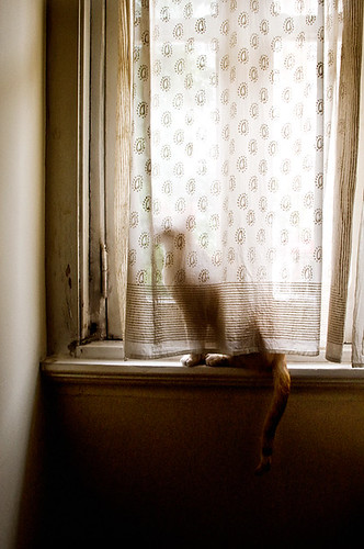 cat at the window 01