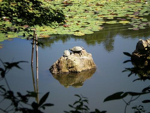 Lago Ryoanji