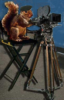 squirrel director