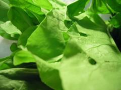 Sorrel Leaves Up Close