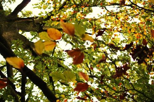 Through the Branches
