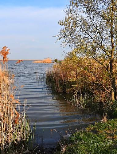 Spring lake Tó tavasz