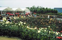 32-08-86 35 - Rose Garden (2)