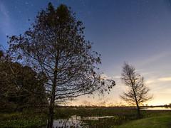 Night at 40 Acre Lake