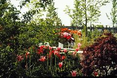 JUN86-12 10 - Dutch Garden