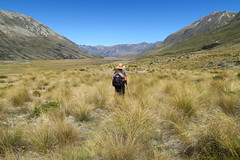 Hiking in the tussock