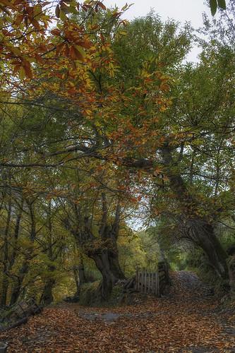 Outono - de Emilio Romanos
