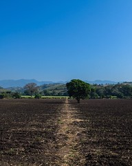 Day 269. Great roads down here are making it easy to keep pace to Costa Rica. Only struggle is because there are people living everywhere it's difficult to find a camp spot. This would have been a good spot to camp though, right beneath that tree. #thewor