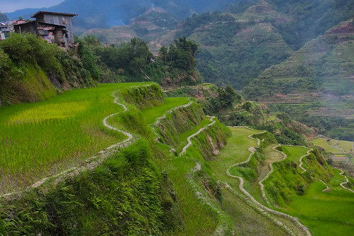 The valley. Banaue