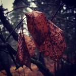 """Still hanging out! #leaf #winter #naturen #nature #naturskola #february #solna #solnanaturskola #picoftheday #navinter #Stockholm #shockholm #lärande #regn #photooftheday #rain #school #science <a style=""""margin-left:10px; font-size:0.8em;"""" href=""""http://www.flickr.com/photos/131645797@N05/24864763541/"""" target=""""_blank"""">@flickr</a>"""