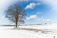 Winter rund um die Ködeltalsperre-1