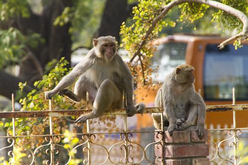 Jain Tempel Ranakpur