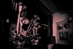 Hungarian Culture Days_Lorand Daniel Eichhardt_2012065