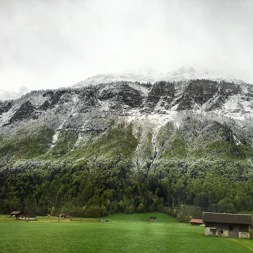 winter / spring