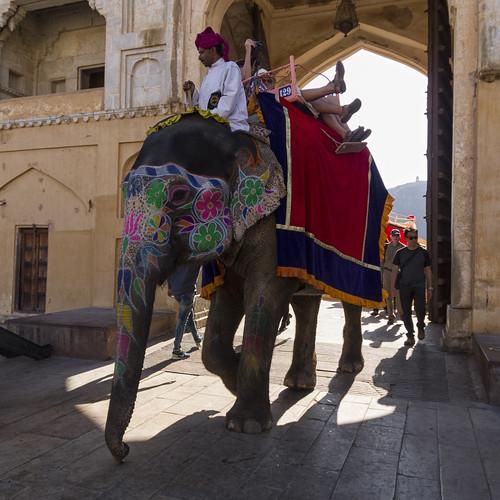 Elefant in Amber Fort Jaipur