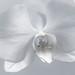 Orkidée [Explore]