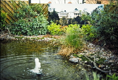 JUN86-12 35 - Cheshire Pool