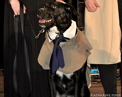 Castiel Dog