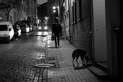 Rostock at Night