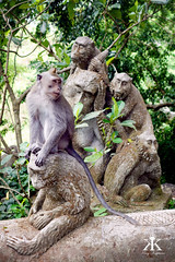 Bali 2015, Monkey Forest, life imitates art WM