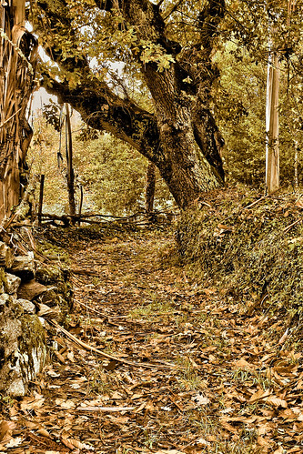 Outono - de Felipe Gallego