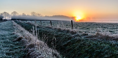 Misty cold morning in February (Explored 4-mar-16)