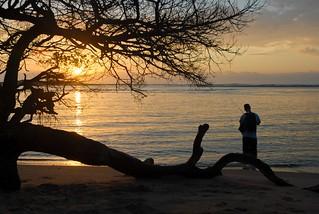 Kosi Bay mouth sunset tree