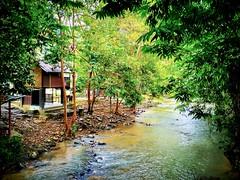Kampung Janda Baik, 28750 Bentong, Pahang https://goo.gl/maps/eSmr8TXBKZk  #travel #holiday #traveling #trip #Asian #Malaysia #旅行 #度假 #亚洲 #马来西亚 #วันหยุด #การเดินทาง #ホリデー #휴일 #여행 #праздник #путешествие #大自然 #nature #природа #ธรรมชาติ #자연 #alam #river #河
