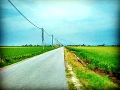 45400 Sekinchan, Selangor https://goo.gl/maps/Uw4MSYz6kk32  #travel #holiday #traveling #trip #Asian #Malaysia #旅行 #度假 #亚洲 #马来西亚 #วันหยุด #การเดินทาง #ホリデー #휴일 #여행 #Sekinchan #Selangor #outdoor #nature #travelMalaysia #tree #树 #田地 #kampung #field #大自然 #пу
