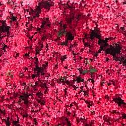 aesthetic pink flowers flower aesthetics hive