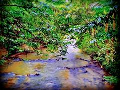Kampung Janda Baik, 28750 Bentong, Pahang https://goo.gl/maps/eSmr8TXBKZk  #travel #holiday #traveling #trip #Asian #Malaysia #旅行 #度假 #亚洲 #马来西亚 #วันหยุด #การเดินทาง #ホリデー #휴일 #여행 #праздник #путешествие #大自然 #nature #河 #River #강 #sungai #川 #река #แม่น้ำ #t