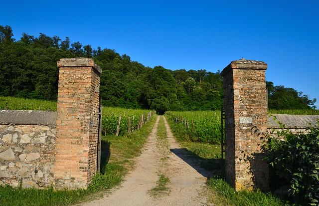 Sentiero dell'uva
