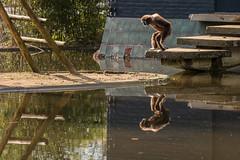 Spiegeling en reflecties Dierentuin Rhenen