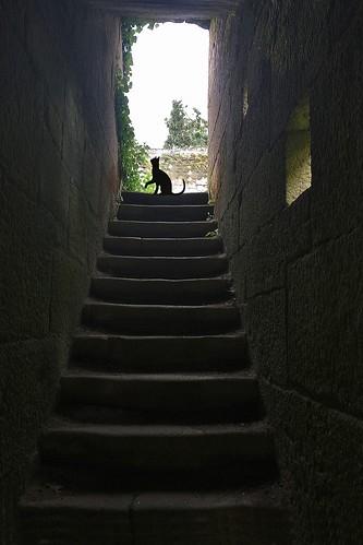 Entre pedras - Luisa Lorenzo