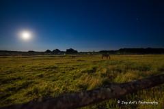 Horses at full moon