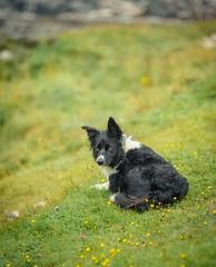 Little highland friend..
