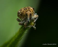 Cool Weevil 3
