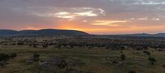 Morning glow in Serengeti National Park