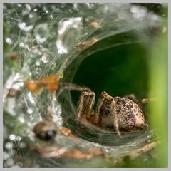De spin ging snel terug naar veilige haven