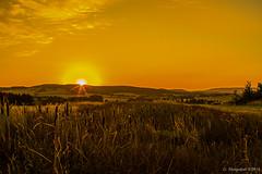 Lippische Landschaften- Sonnenaufgang über Istrup