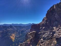 Nanny and kid mountain goats below the Pyramid Peak summit