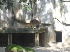 IMG_2503_Burgers_Zoo